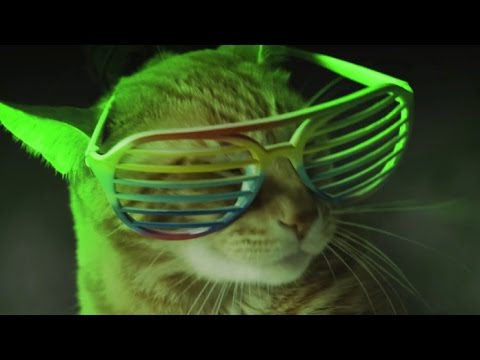 Meow mix theme song download